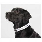 Promotional products: Full Color Pet Collar - 1